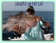Grouper on fat cat with capt jay