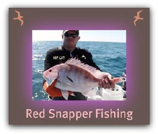 Red Snapper fishing with fat cat fishing charters.